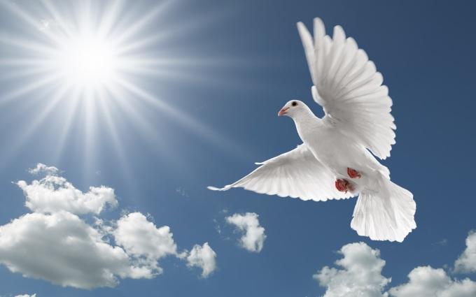 images-of-doves-1-white-flying-dove