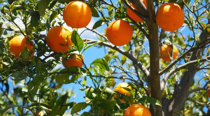 oranges-1117628_1280.jpg